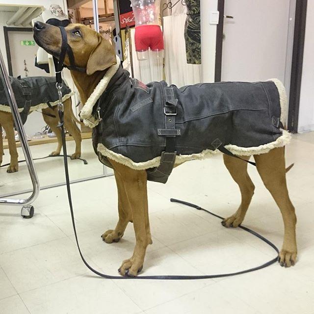 hundar jacket